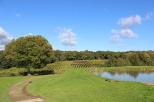 sunny autumn day at Bluebell