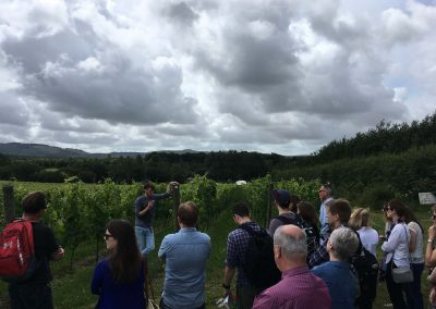 Great British Wine Tours - Vineyard and brewery tours in Sussex, UK - Wide image (28 of 60)