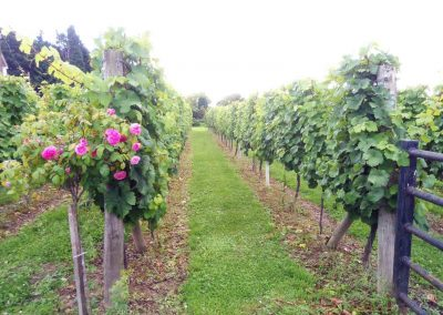 Great British Wine Tours - Vineyard and brewery tours in Sussex, UK - Wide image (33 of 60)