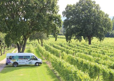 Great British Wine Tours - Vineyard and brewery tours in Sussex, UK - Wide image (42 of 60)