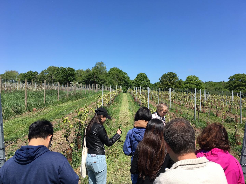 vineyard tur at Kingscote Estate Vineyard