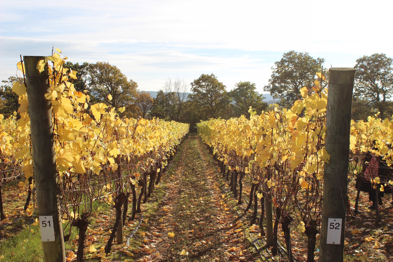 Autumn Colours at Ridgeview Wine Estate
