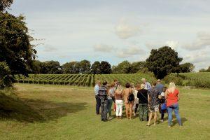 Vineyard Tour at Court Garden Vineyard