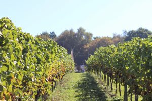 Hidden Spring vineyard tour
